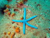 Starfish, Vietnam, Nha Trang — Stock Photo
