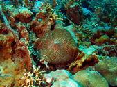 Weiche koralle, vietnam — Stockfoto