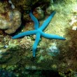 Starfish, Vietnam - Stockfoto