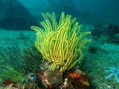 Sea lily of the Philippine sea — Stock Photo