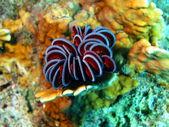 Sea lily — Stock Photo