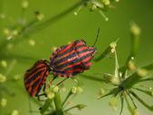 Wood bugs — Stock Photo