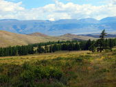 The Altay forest-steppes — Stock Photo
