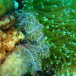 Sea lily — Stock Photo #38200639