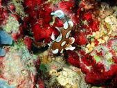 Korall fisk — Stockfoto