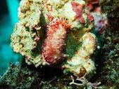 Havet slug — Stockfoto