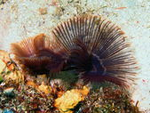 Gills of sea worm — Stock Photo