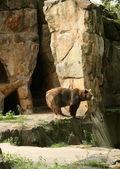 Happy lazy bear — Stok fotoğraf