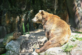 Happy lazy bear — Stock Photo
