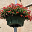 Stock Photo: Flowers on lamppost