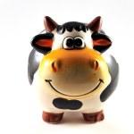 Piggy cow — Stock Photo
