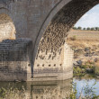 Stock Photo: Tajo River