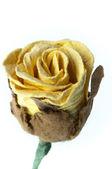 Flor de papelão — Fotografia Stock