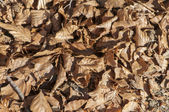 Fallen leaves of trees — Stock Photo