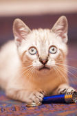 Little cat  — Стоковое фото