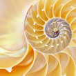 Stock Photo: Nautilus Shell