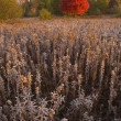 Autumn Meadow — Stock Photo