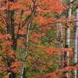 Autumn Forest — Stock Photo #12257532