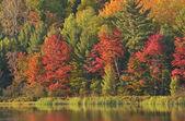 Autumn, Doe Lake — Foto Stock