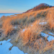 Stock Photo: Winter, Saugatuck Dunes
