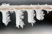 Icicles on Twig with Hoarfrost — Stock Photo