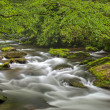 Stock Photo: Oconaluftee Creek