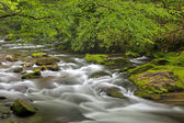 Oconaluftee Creek — Stock Photo