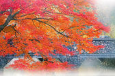 Autumn Maple and Stone Bridge — Stock Photo