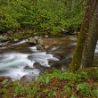 Spring, Big Creek - Stock Photo