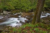 Spring, Big Creek — Stock Photo