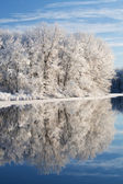 Snow Flocked Shoreline — Stock Photo