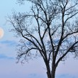 Full Moon and Bare Tree — 图库照片