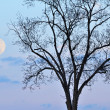 Full Moon and Bare Tree — Stock Photo #12647731
