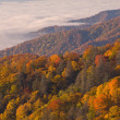 Autumn, Great Smoky Mountains — Stockfoto