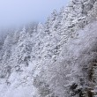 Постер, плакат: Snow Flocked Trees Great Smoky Mountains