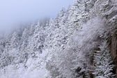 Snow Flocked Trees, Great Smoky Mountains — Stock Photo