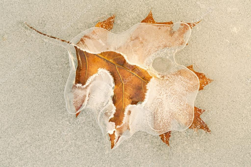 Close-up of a frosted oak leaf encased in lake ice  — Stock Photo #12821352