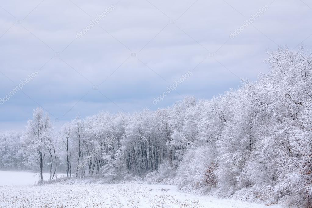 Winter landscape of snow flocked trees, Michigan, USA — Stock Photo #12821961