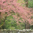 Spring crabapple Tree and Rock Wall - Stock Photo