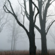 Bare Trees in Fog - Stock Photo