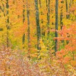 Autumn Forest with Dusting of Snow - Stock Photo