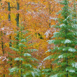 Autumn Forest with - Stock Photo