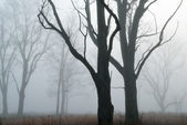 Bare Trees in Fog — Stock Photo