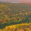 Stock Photo: Autumn Forest and Lake