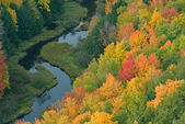 秋天的森林和流 — 图库照片