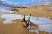 Stříbrné jezero písečné duny — Stock fotografie