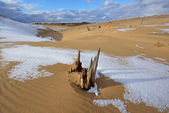 Dunas de arena del lago de plata — Foto de Stock