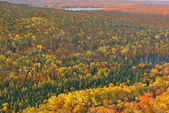 Autumn Forest and Lake — Stok fotoğraf