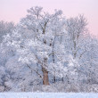 Foto Stock: Snow Flocked Trees