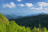 Summer, Great Smoky Mountains — Stock Photo